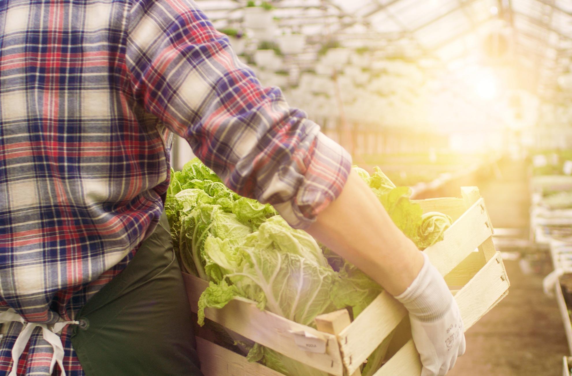 Obst und Gemüse frischer genießen Freshany